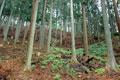 使用木材の山林をお客様と見学しました